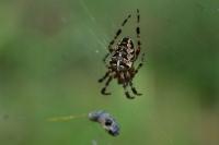 Паук в лесу и его жертва в паутине