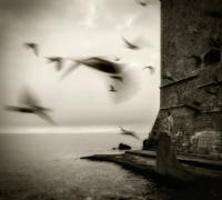 Летящие птицы на фоне моря, замка