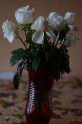 Свежие белые маленькие розы в вазе в полный рост