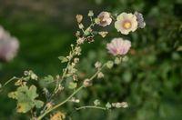 Бурьян или цветок на Пейзажке