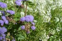 Бело-фиолетовые полевые цветы