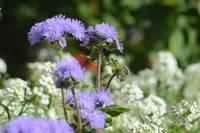 Фиолетовые пёстрые полевые цветы