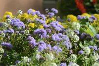 Разнотравие: желтые, синие полевые цветы