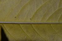 Жёлтый осенний лист