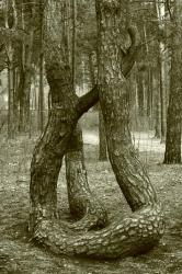 Дерево со скрученным стволом