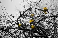 Жёлтые осенние яблоки на осенней яблоне