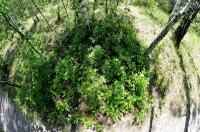 Зелёный островок в полувыгоревшем от солнца лесу
