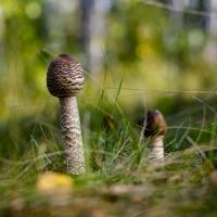 Красивый гриб в осенней траве