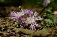 Непонятный и красивый цветок выделялся в зарослях травы и иголок