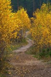 Осення тропинка в лесу под Киевом. В цвете
