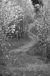 Осення тропинка в лесу под Киевом. Монохром