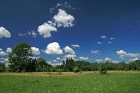 Поляна в лесу под Миргородом в яркий прохладный день