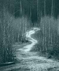 Тропинка в лесу весной. Монохром. Киев. Лес