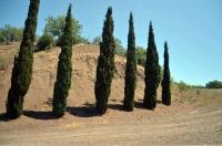 Кипарисы вдоль дороги