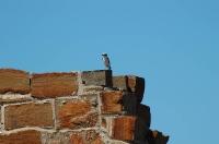 Стена крепости и любопытная птичка