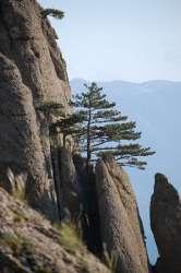 Крым. Одинокое дерево на откосе горы