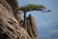 Вида на дерево с горы Демерджи